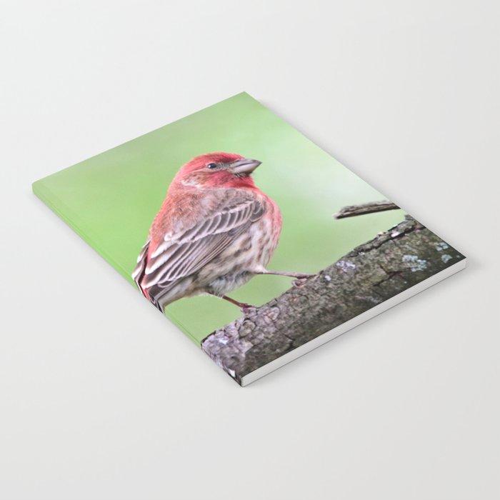 Fancy Finch Notebook