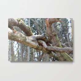 Intertwining Metal Print