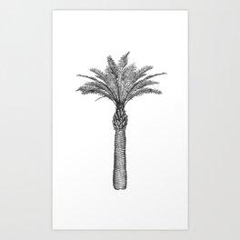 PALMAE Art Print