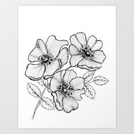 Dog Rose Wild Irish Rose Art Print