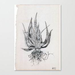 Uprooted Canvas Print