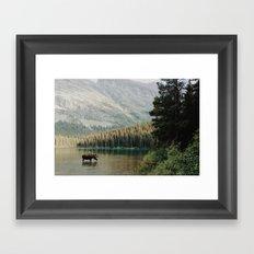Bull Moose at Swiftcurrent Lake Framed Art Print