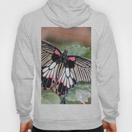 Majestic Tropical Butterfly Hoody