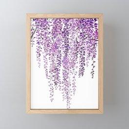 purple wisteria in bloom Framed Mini Art Print