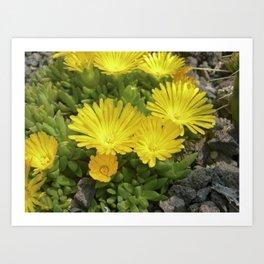 yellow cactus bloom IV Art Print