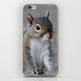 Squirrel iPhone Skin