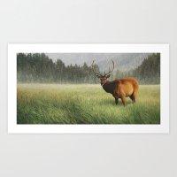 Yellowstone Elk Art Print