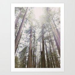 Foggy Redwoods Art Print