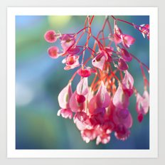 Angel Wing Begonia Art Print