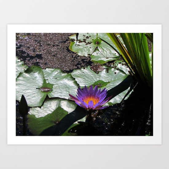 Lily Pad Accessories Art Print