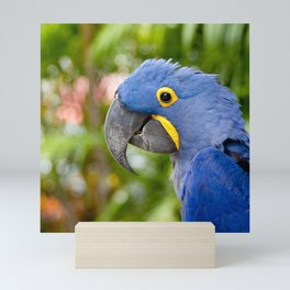 Blue Hyacinth Macaw - Anodorhynchus hyacinthinus Mini Art Print