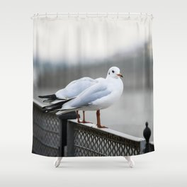 Sitting on The Fence Shower Curtain