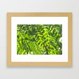 Sunny Leaves Framed Art Print