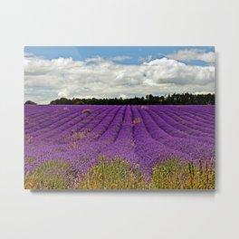 Lavender Landscape Metal Print