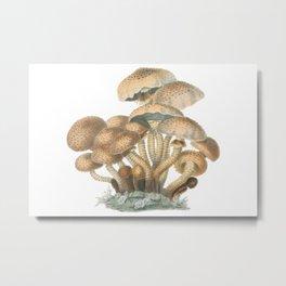Agaricus Squarrosus Metal Print
