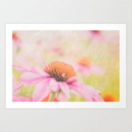 Pink Coneflower Revels Art Print