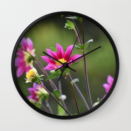 Magenta Dahlias Wall Clock