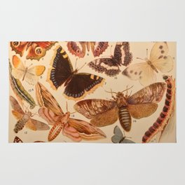 Vintage insects 1 Rug