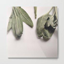 Fresh Sage  Metal Print