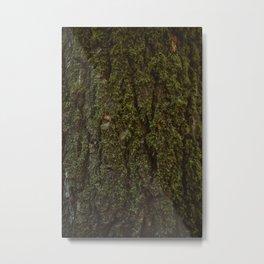 Redwood Forest XV Metal Print