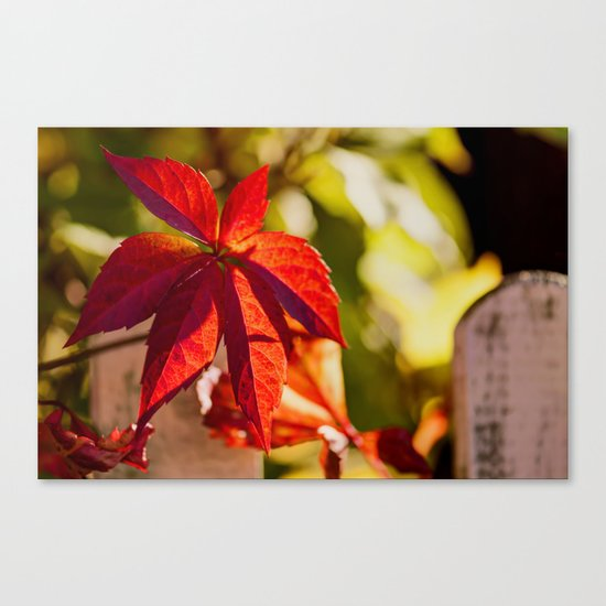 Red Autumnlights- Indian Summer VI Canvas Print