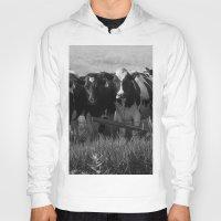 cows Hoodies featuring Cows by Julie Luke
