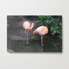 National Aviary - Pittsburgh - American Flamingo 1 Metal Print