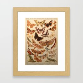 Vintage insects 1 Framed Art Print