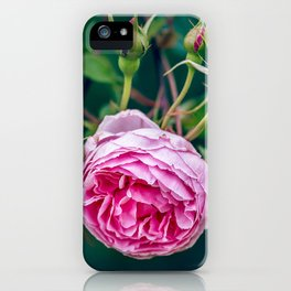 Blessing Rose iPhone Case