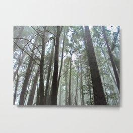 Fog Trees Metal Print