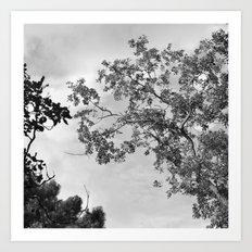 Zen trees up in the air Art Print