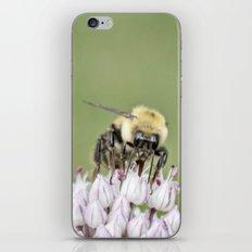Busy Bee iPhone & iPod Skin