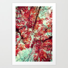 Candied Fall Art Print