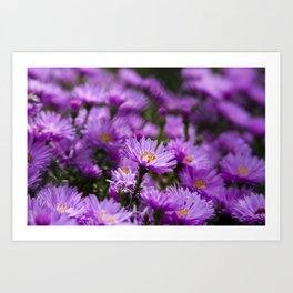 Closeup of beautiful purple flowers Art Print