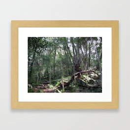 Forest Walks 1 Framed Art Print