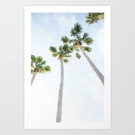 PALM TREES | ST. PETE, FL Art Print