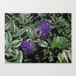Pico Morado, Uno Canvas Print