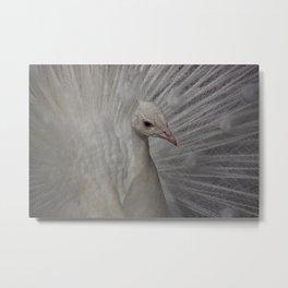 Paon blanc Metal Print