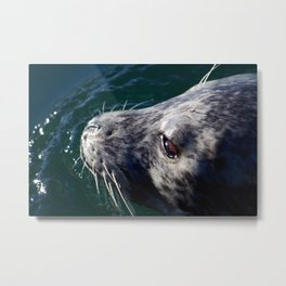 Seal in Ocean2 Metal Print