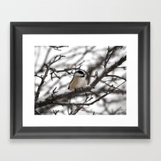 Winter Windblown Black-Capped Chickadee Framed Art Print