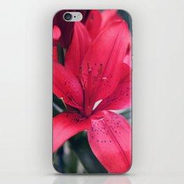 Red Winter Flower iPhone Skin