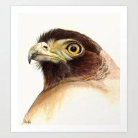 eagle Art Prints featuring eagle by Alessandra Razzi Illustrazioni