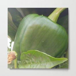 Baby bell pepper Metal Print