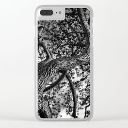 A Study of a Canadian Pine Tree Clear iPhone Case