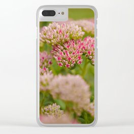 Flowers Pink Sedum Garden A Sunny Day Clear iPhone Case