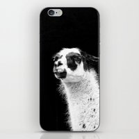 lama iPhone & iPod Skins featuring Lama by art9
