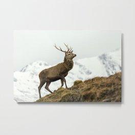 Red Deer Stag in Winter Metal Print