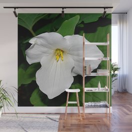 Trillium in the spotlight Wall Mural