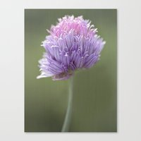 clover Canvas Prints featuring Clover by Fran Walding