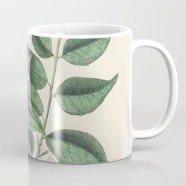 Diesel tree (Copaifera officinalis)  from Medical Botany (1836) by John Stephenson and James Morss C Coffee Mug